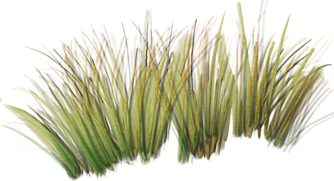 Beach grass png. Index of sid aw