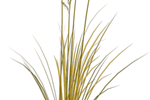 Beach grass png. Image related wallpapers