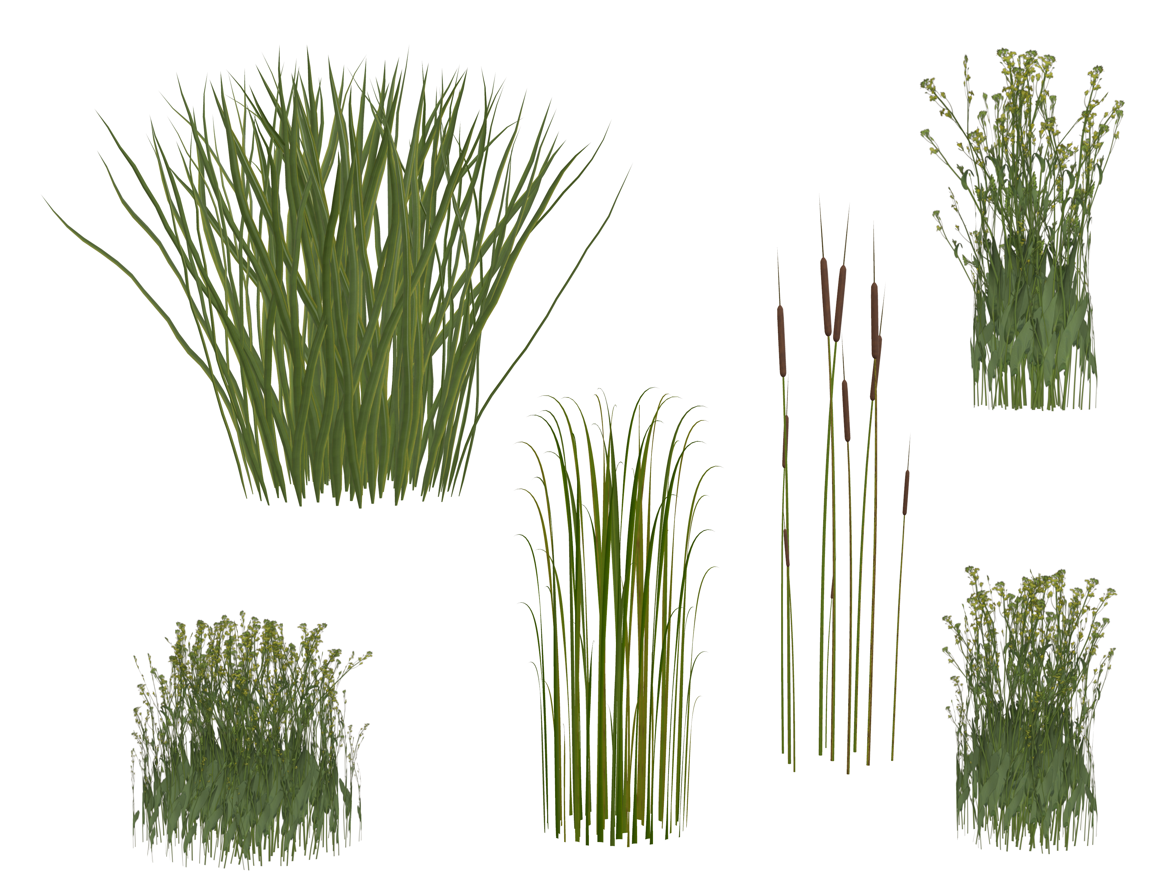 Grass plant png. Free photo isolated transparent