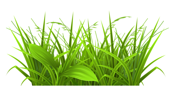 Beach grass png. Decorative clipart picture gallery