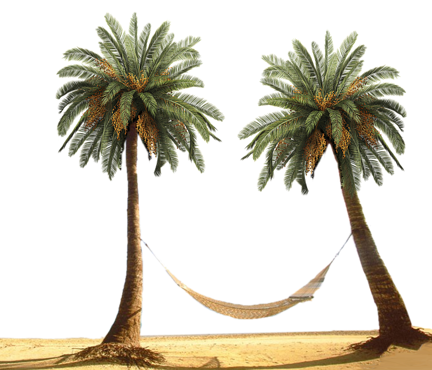 Date palm png. Tree by designway on