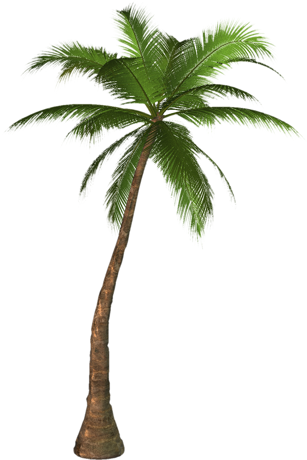 Beach palm tree png. Drawing at getdrawings com