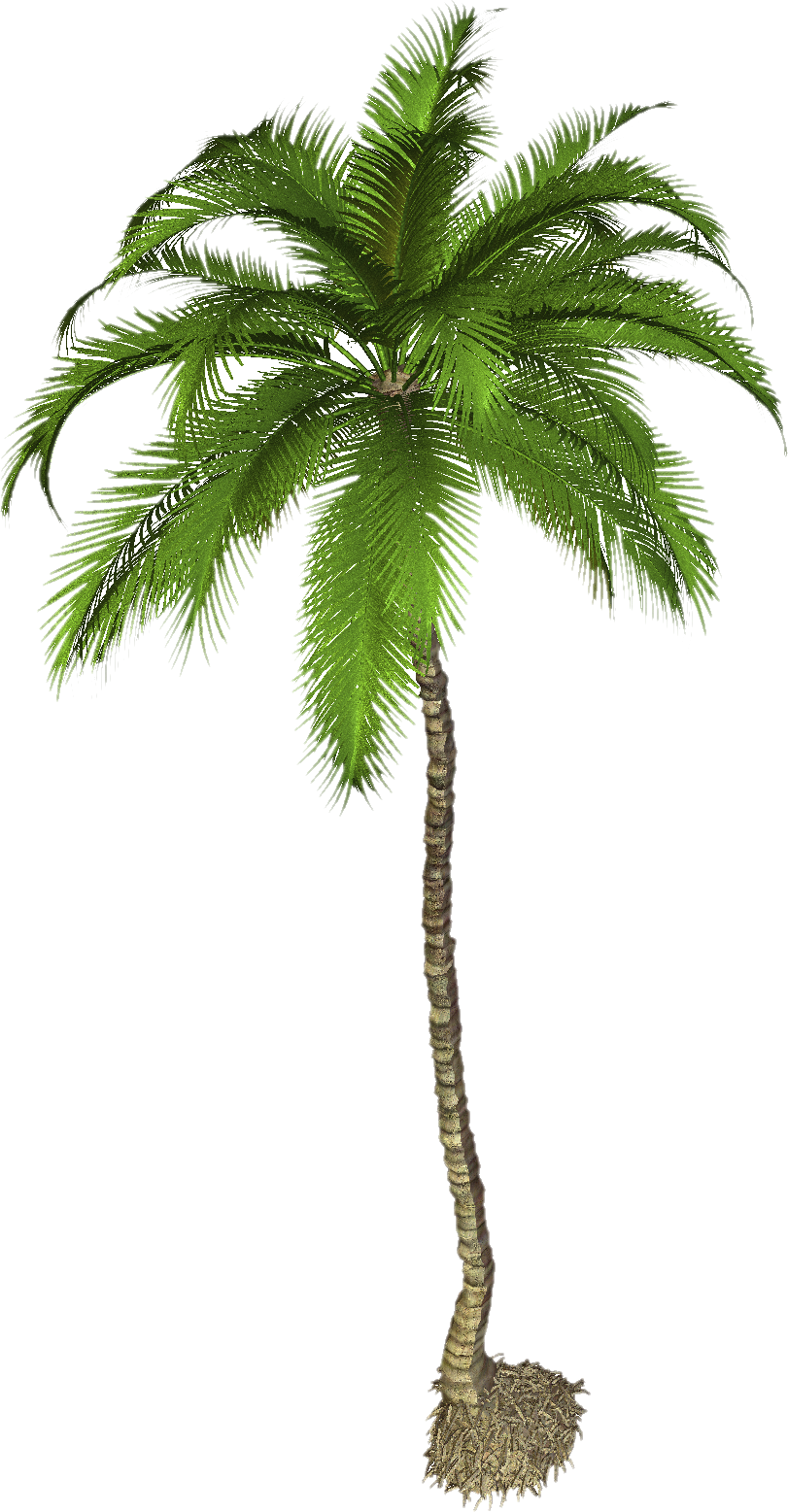 Tropical palm tree png. Transparent images all pic
