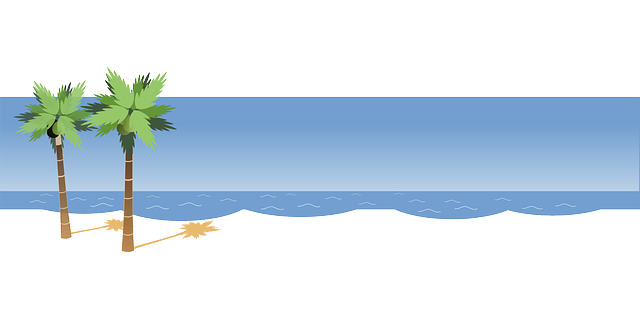Playa vector background. Palm sea beach png