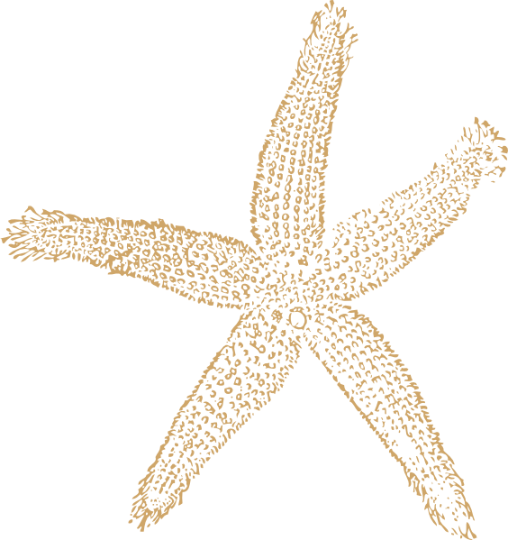 Beach Starfish For Wedding Clip Art at Clker