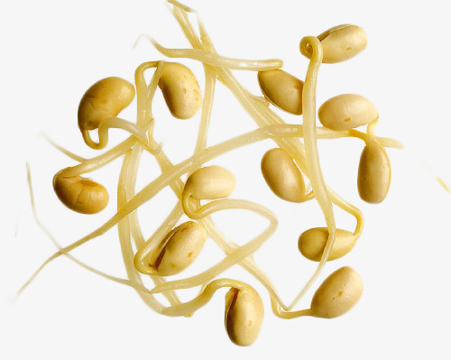 Bean clipart bean sprout. Yellow sprouts vegetables green