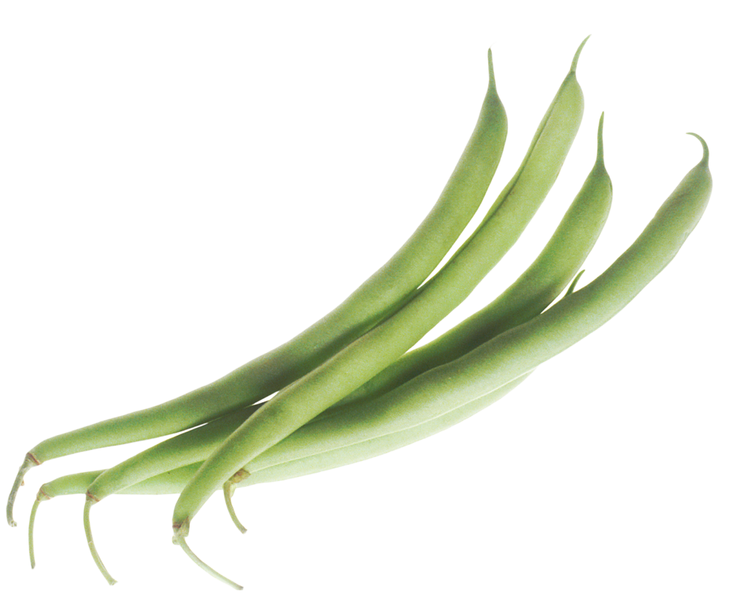 Free green png image. Beans vector transparent clip art freeuse