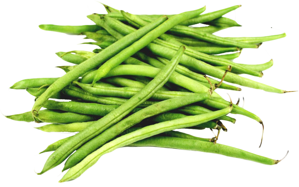 Beans vector transparent. Free green png clipart