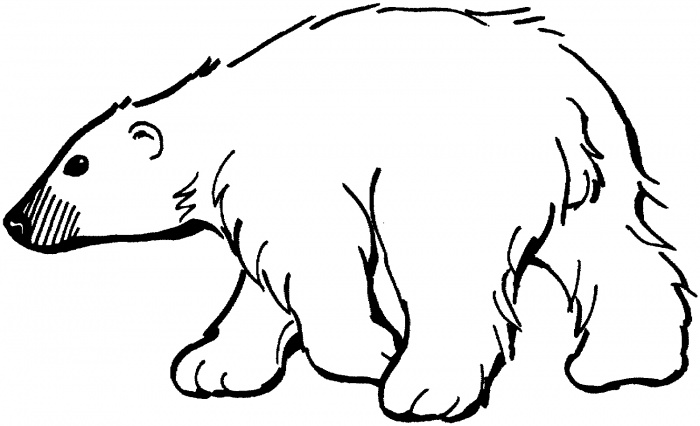Bear clip art black and white. Polar drawing at getdrawings