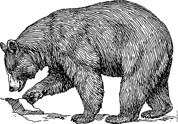 Bear clip art black and white. Free vector in open