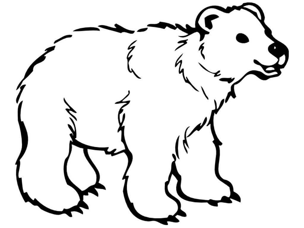 Bear clip art easy. Polar bears pictures to