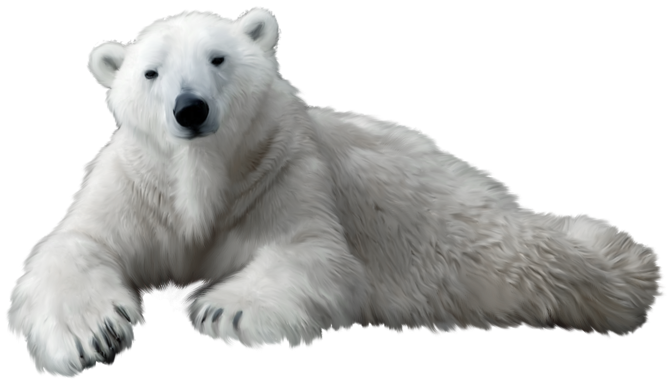 png polar bear