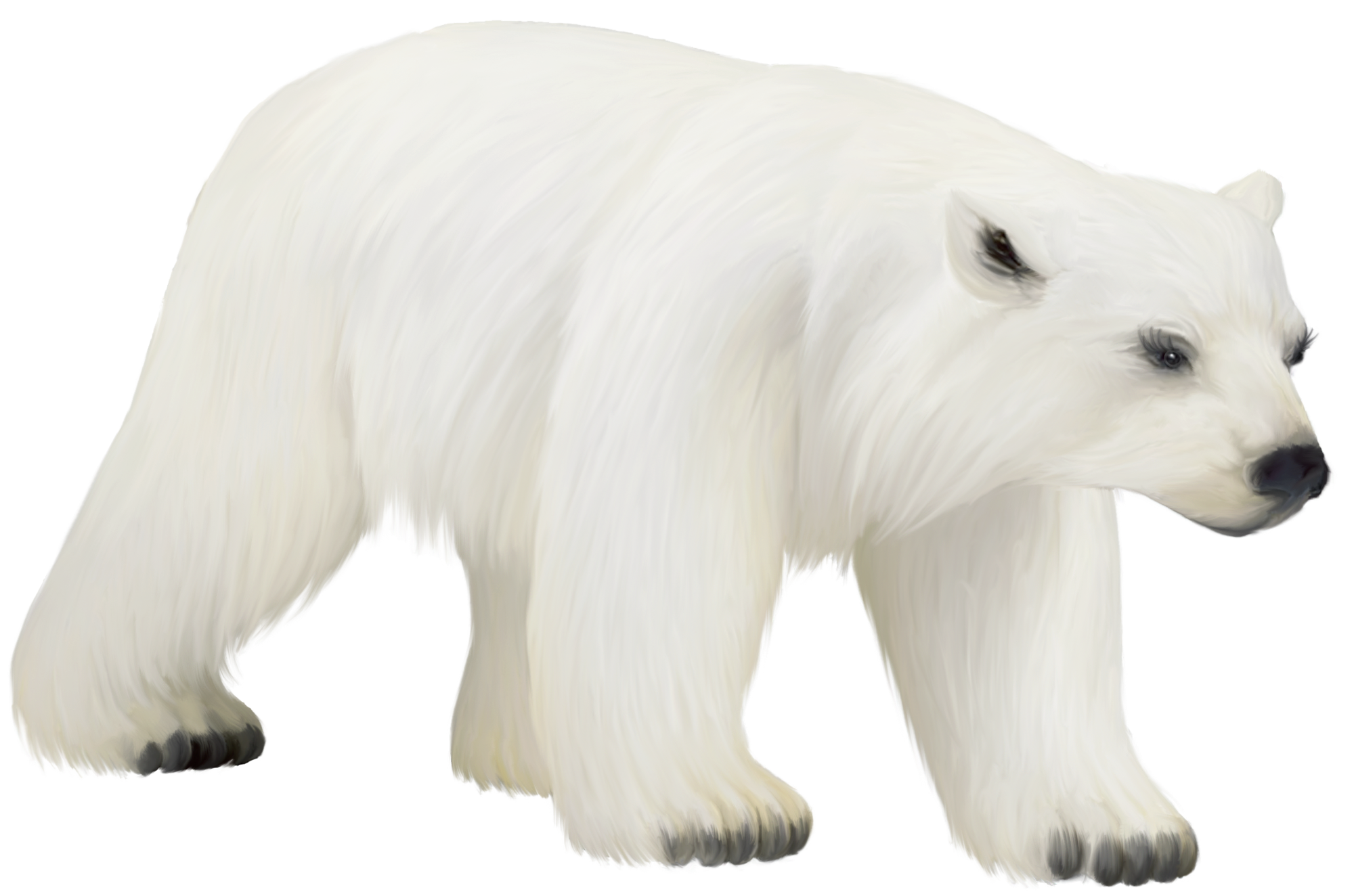 Bear clipart polar bear. Large painted png gallery