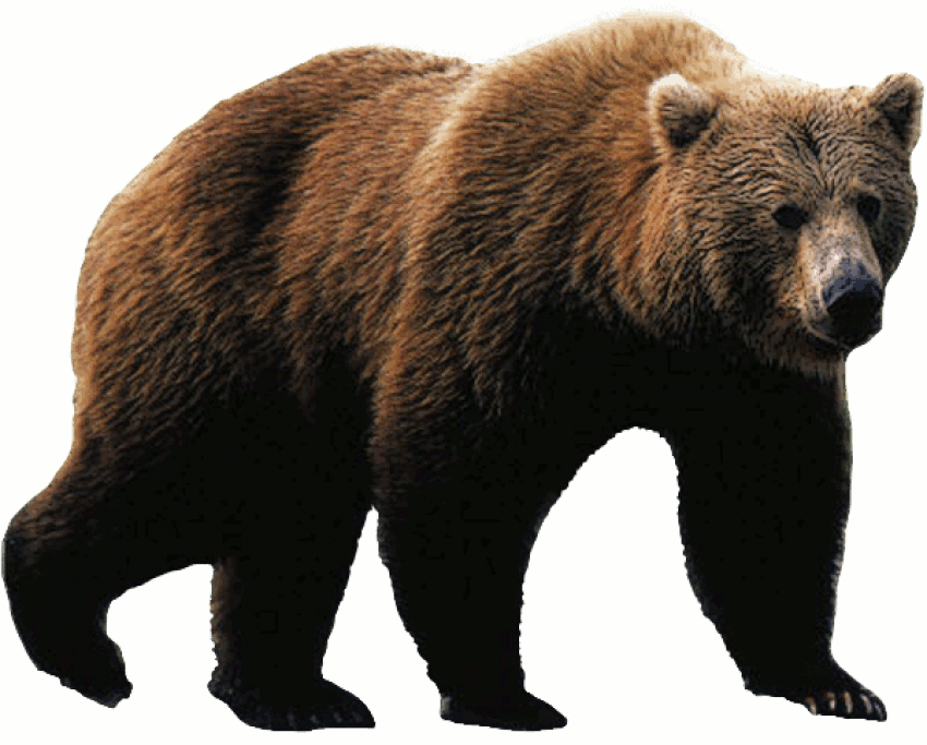 Bear png. Free images toppng transparent