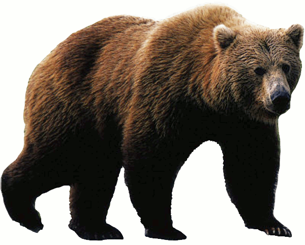 Bear png transparent. Picture web icons