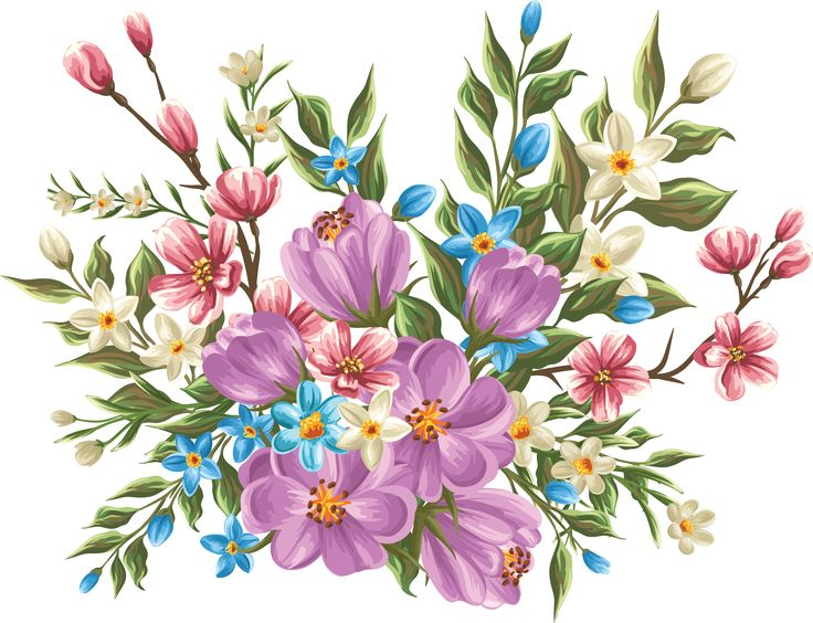 Beautiful clipart bunch. Best flowers images on