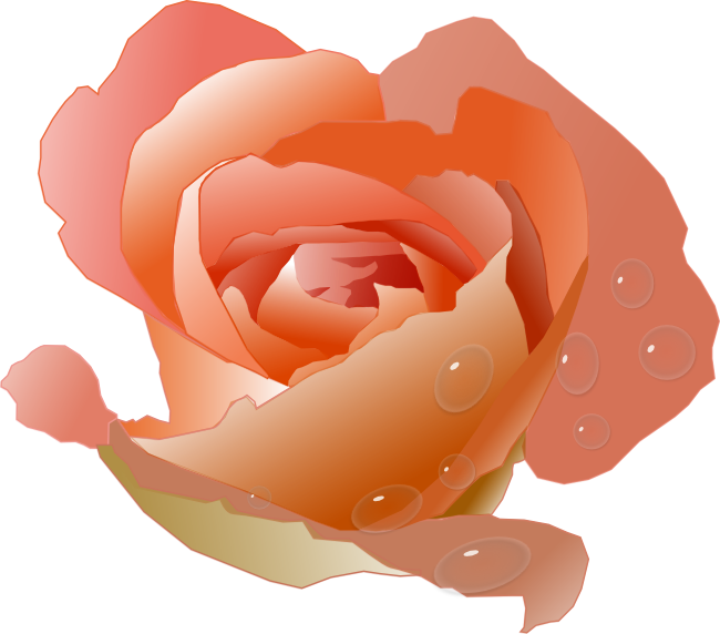 Beautiful clipart peach rose. Roses free