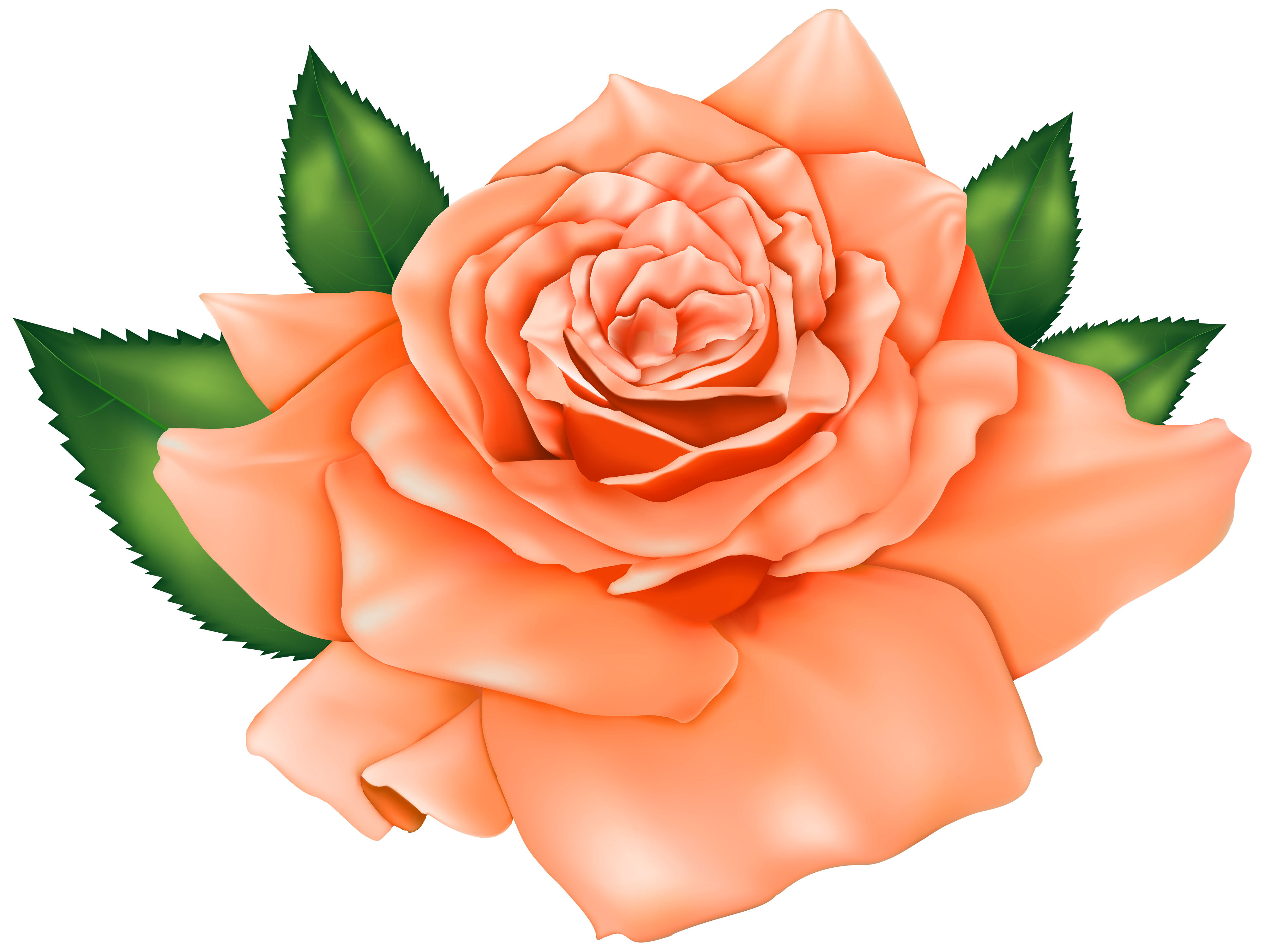 Peach flowers png. Beautiful orange rose clipart