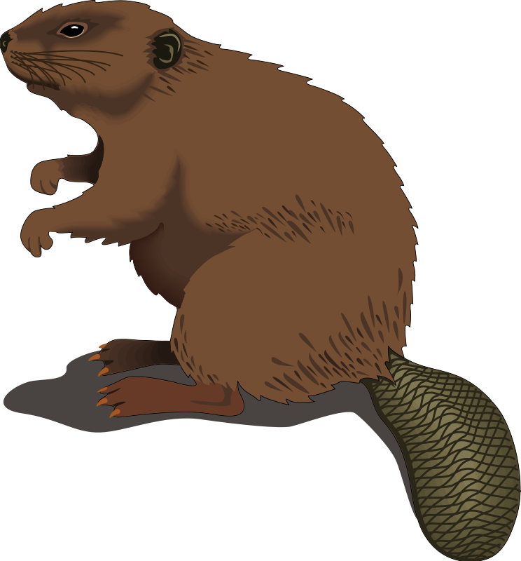 Free cliparts download clip. Beaver clipart image transparent stock