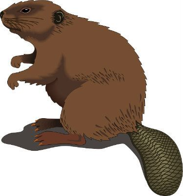 First look at the. Beaver clipart beaver family graphic free download