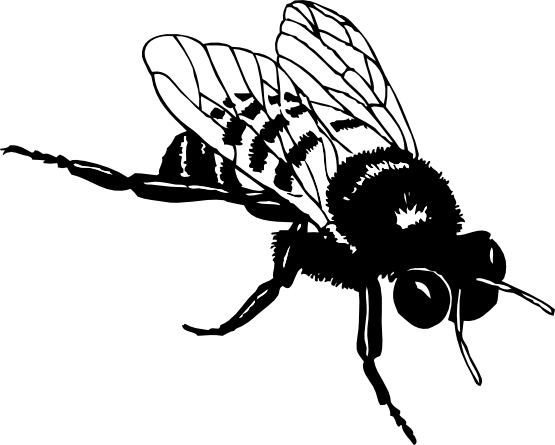Bee black and white png. Clipartist net clip art
