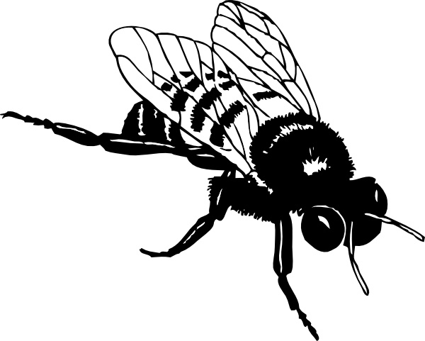 Bee clip art black and white. Bumble free vector in