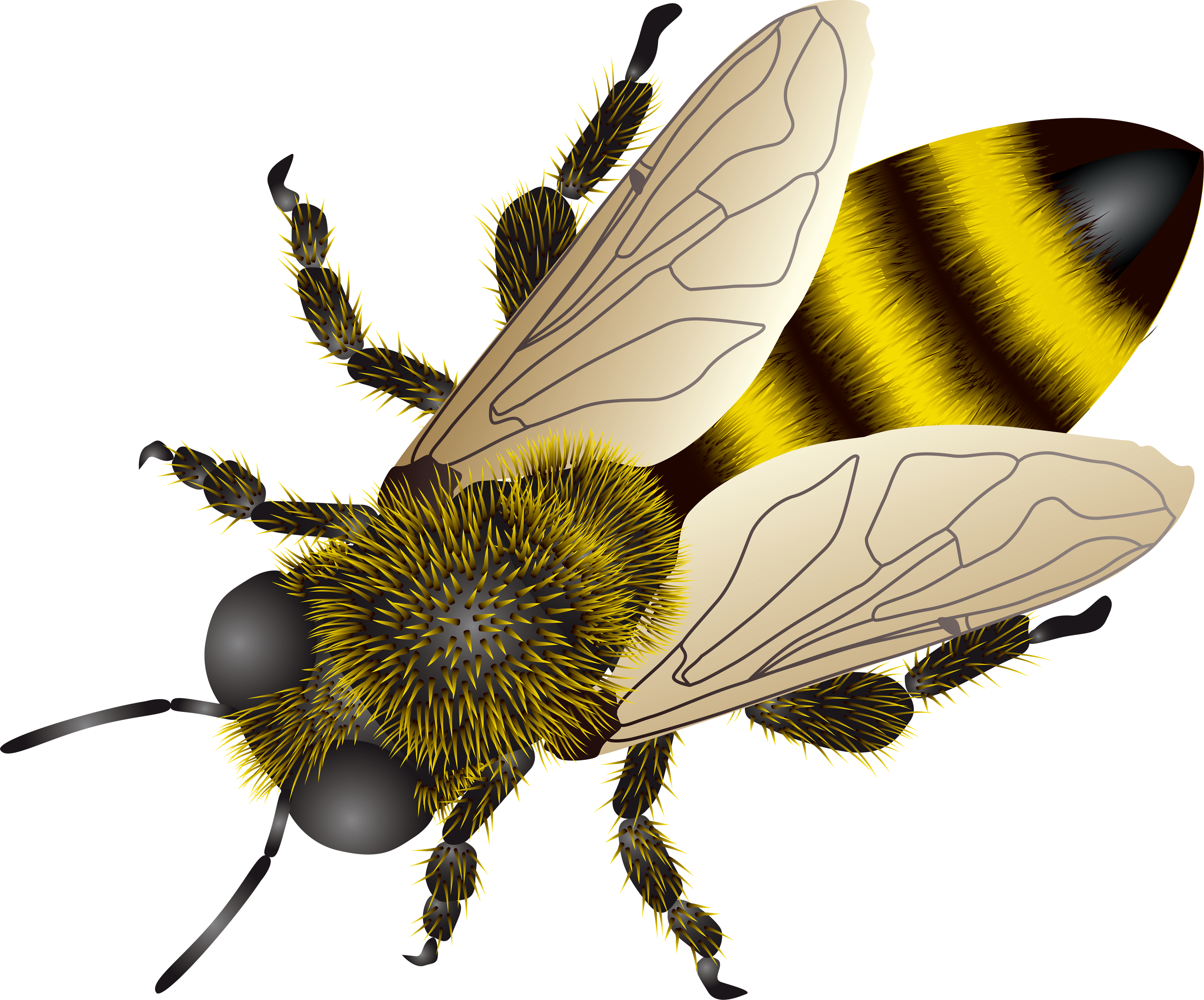 Bee clip art clear background. Png images free icons
