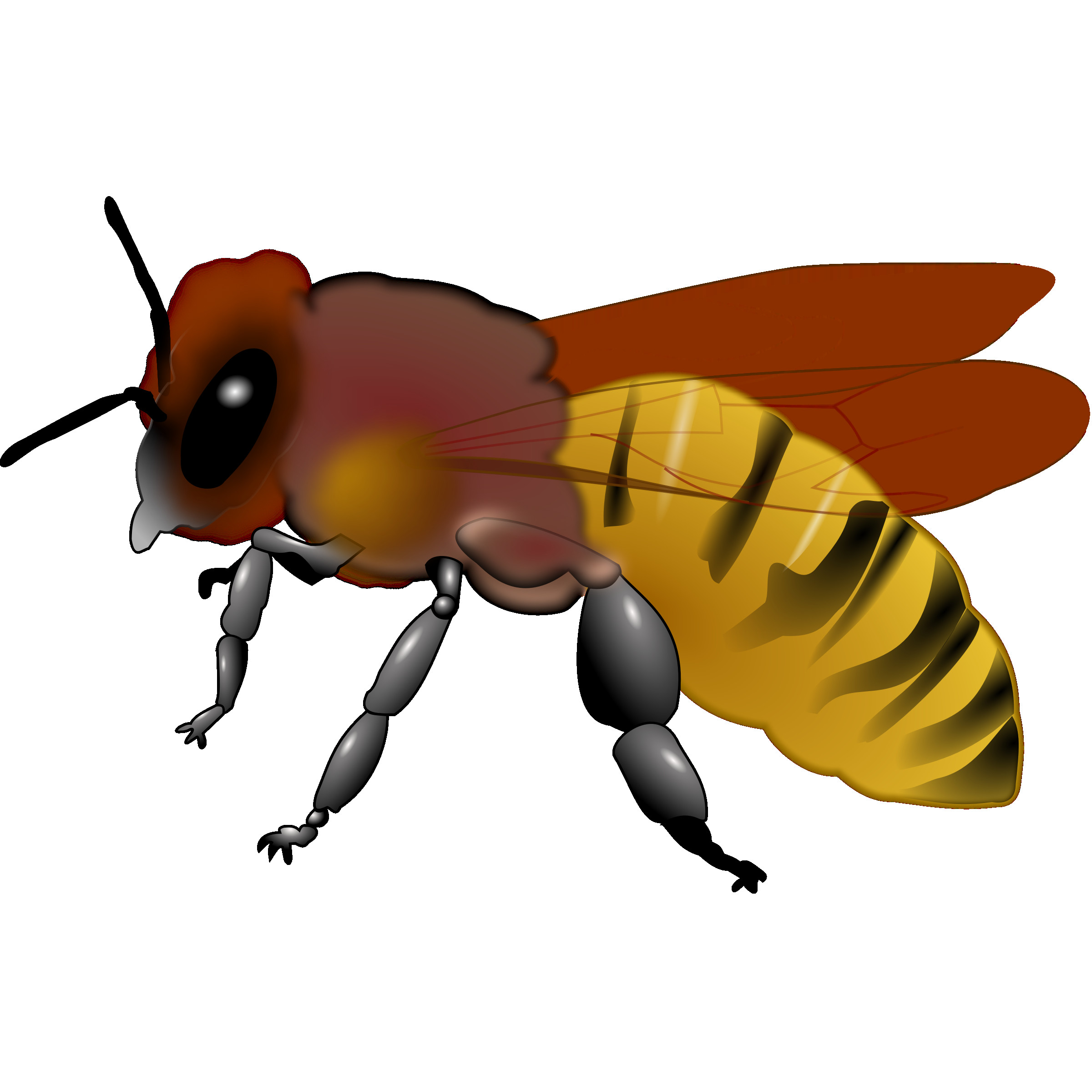 Bee clip art honey bee. Clipart honeybee d pinterest