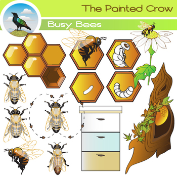 Life cycle bugs color. Bee clip art insect clip art freeuse
