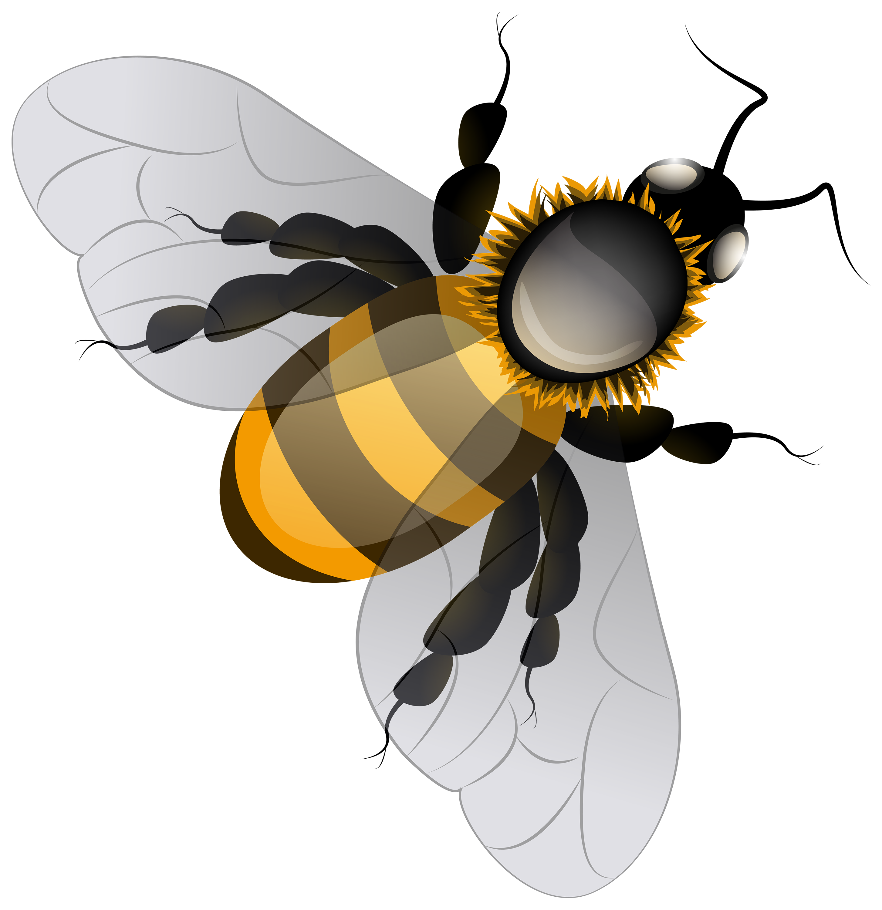 Bee clip art insect. Png best web clipart