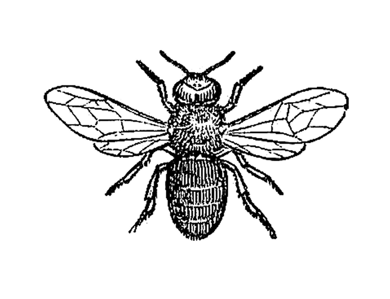 Bee clip art insect. Best photos of black