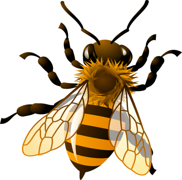 Bee clip art realistic. Clipart pencil and in