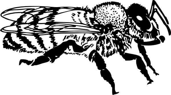 Bee clip art realistic. Honey at clker com