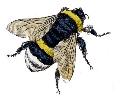 Image information vintage. Bee clip art realistic banner royalty free download