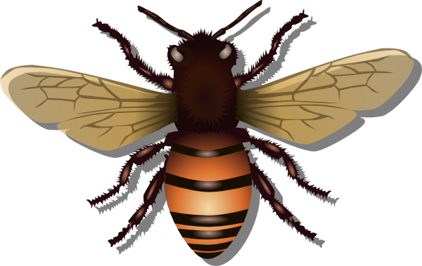 Bee clip art realistic. Bees clipart pencil and