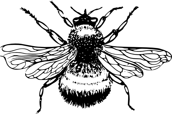 Bee clip art realistic. Free bumble illustrations download