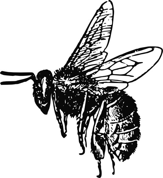 Bee clip art realistic. Best line images