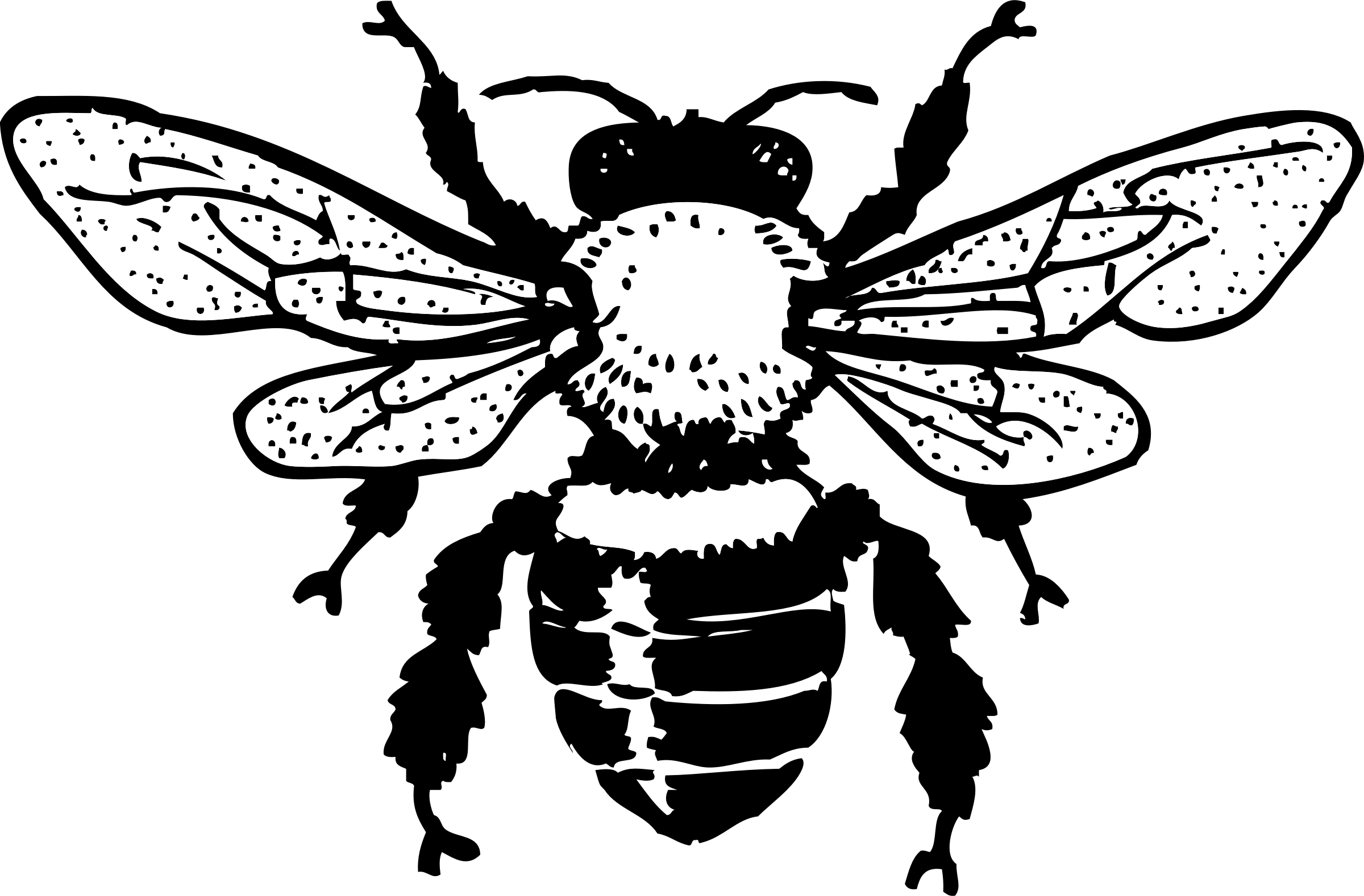 honey clipart honey bee