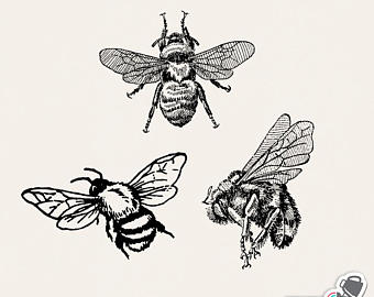 Etsy set png bumblebee. Bee clip art vintage svg library stock