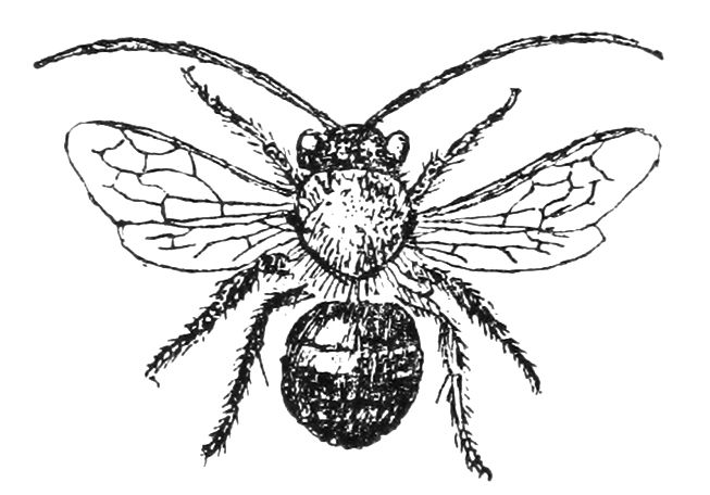 Bee clip art vintage. Free illustrations and clipart