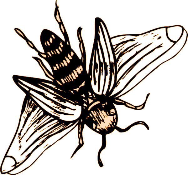 bee drawing png