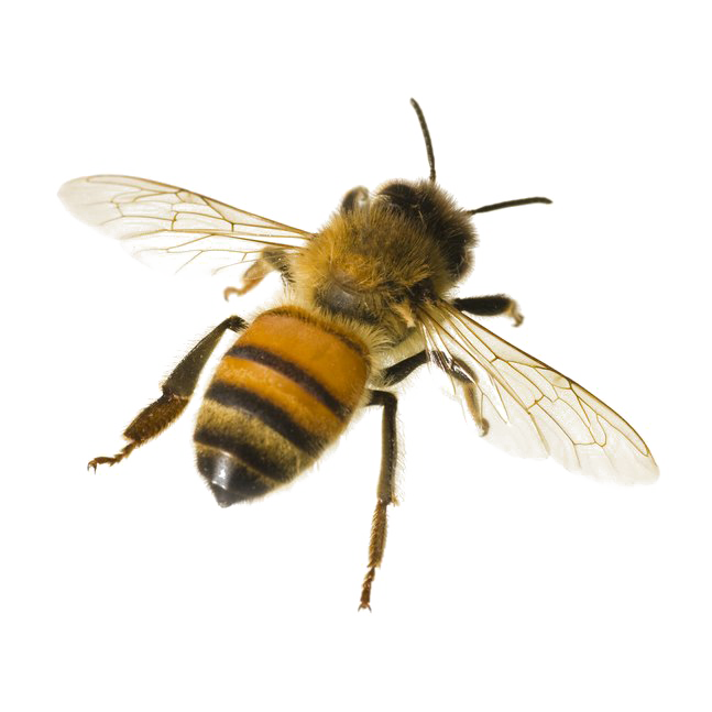 Photo arts. Bee png clip art black and white library