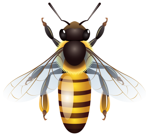 Bees transparent isolated. Bee png clip art