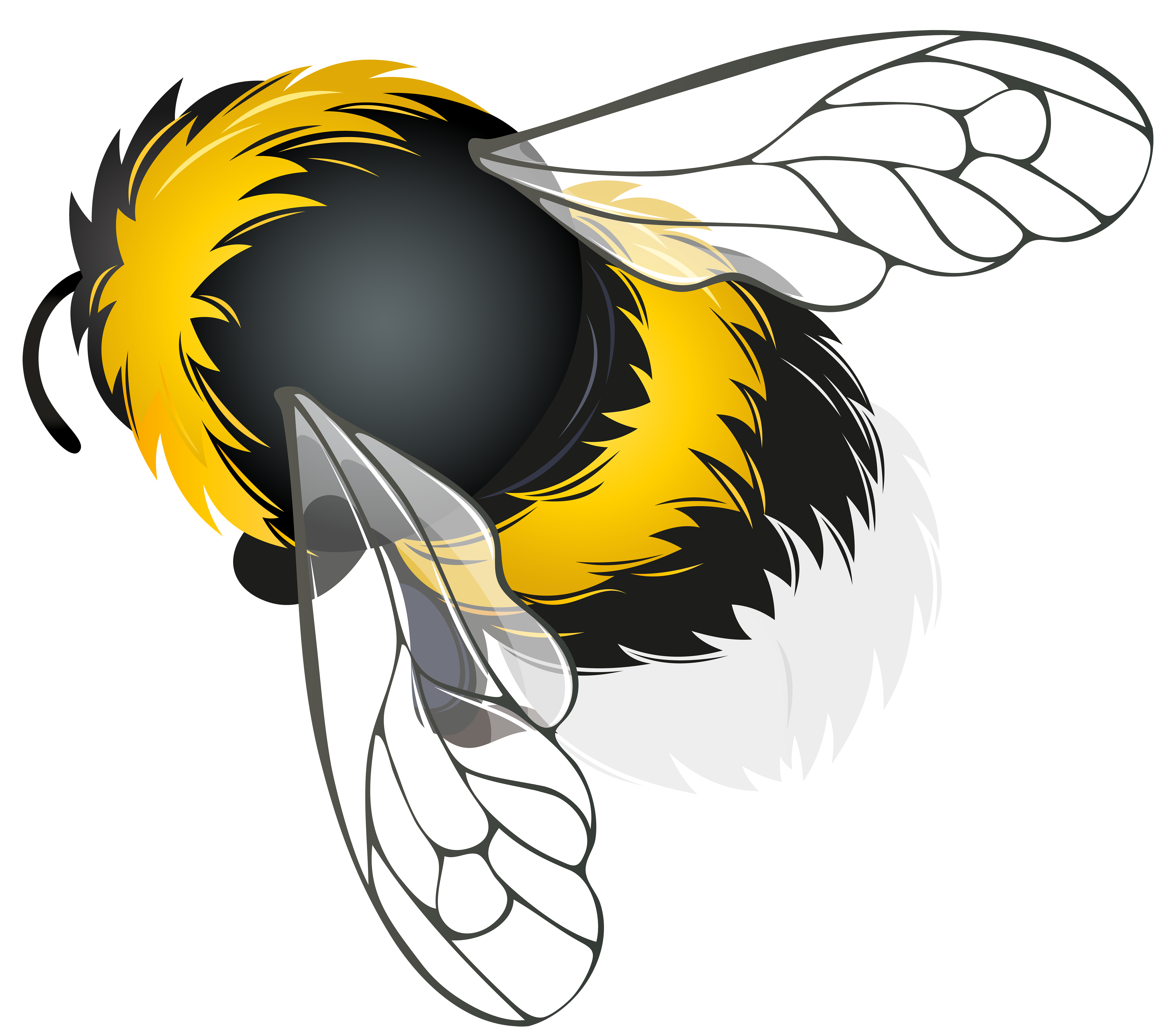 Bee png clipart. Best web