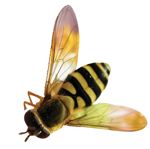 Bee transparent png. Background
