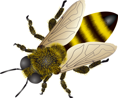 Bees transparent background. Gallery isolated stock photos