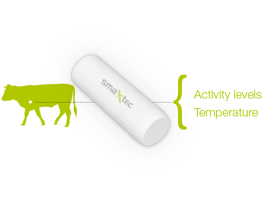 Cattle vector cow switzerland. Smaxtec monitor your dairy