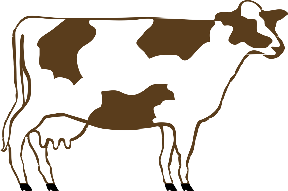 Drawing cow dairy. Holstein friesian cattle calf