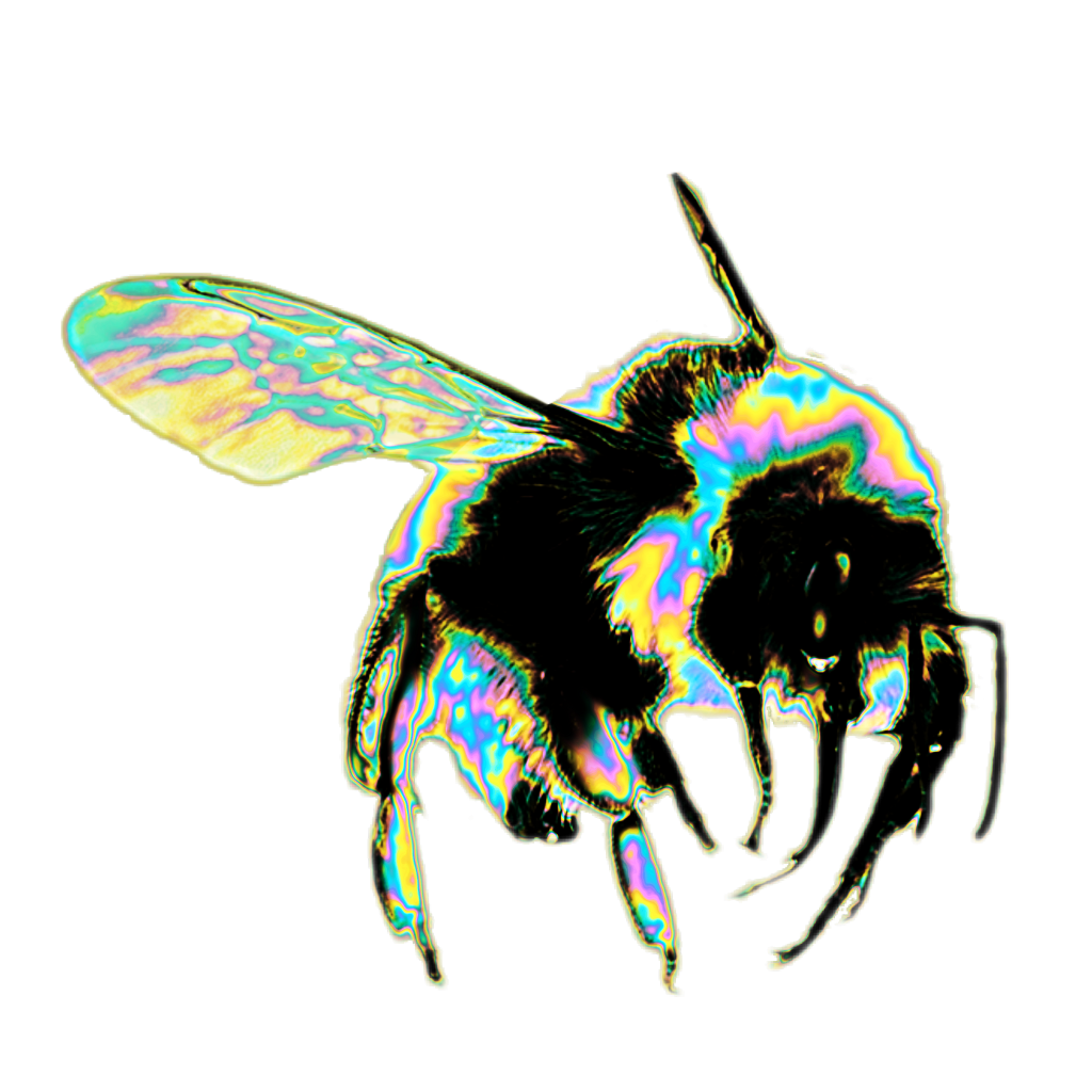 Bees transparent. Holo holographic bee bug