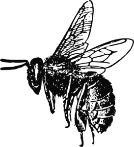 Drawing insects sci fi. Bee clip art ideas